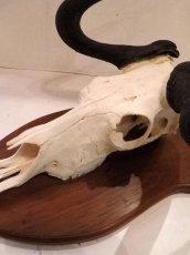 画像7: Skull Wall Hang (7)
