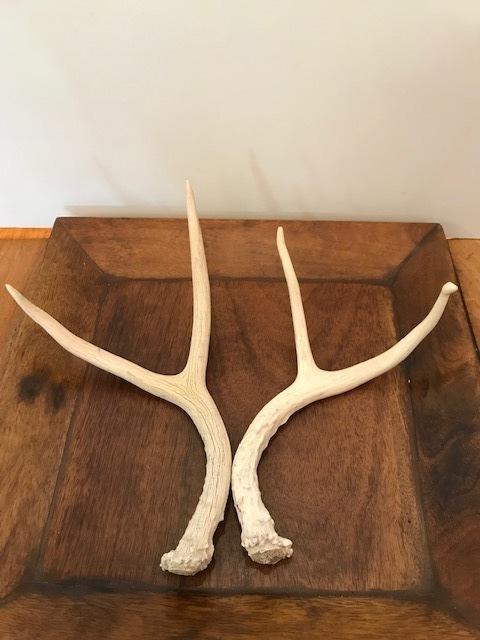 画像1: Antler Ornament  (1)