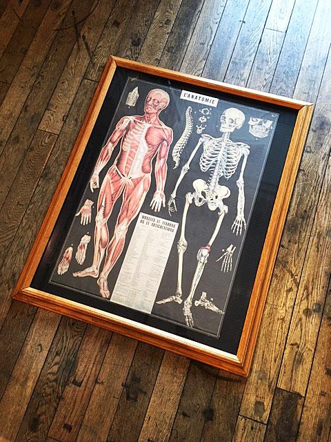 画像1: Anatomical Chart Wall Hang (1)