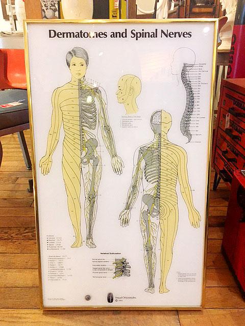 """画像1: """"Visual Odyssey"""" Anatomical Chart (1)"""